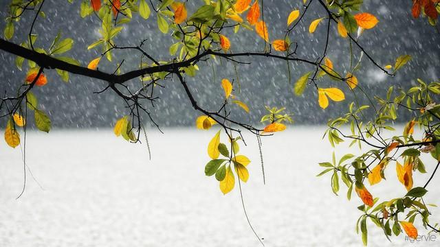 Những khung cảnh lãng mạn ai cũng nhớ đến khi mùa Thu gõ cửa Hà Nội - Ảnh 8.