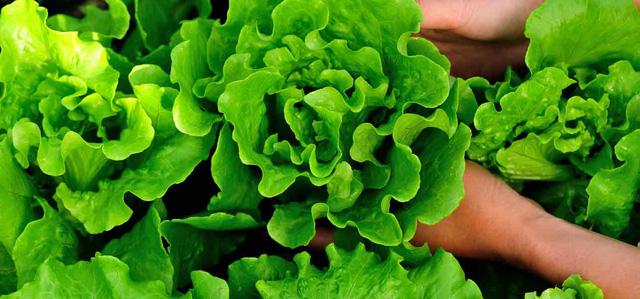 Những loại rau, quả chứa nhiều nước nhất, tốt cho cơ thể - Ảnh 1.