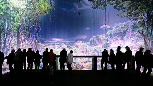 Tái hiện rừng nhiệt đới Amazon với 30.000 tấm ảnh - Ảnh 2.