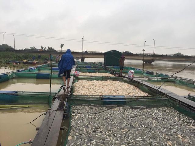 Thừa Thiên Huế: Hàng trăm tấn cá chết trắng, bị lũ cuốn trôi - Ảnh 3.