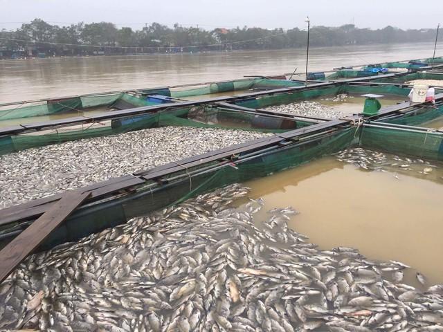 Thừa Thiên Huế: Hàng trăm tấn cá chết trắng, bị lũ cuốn trôi - Ảnh 2.