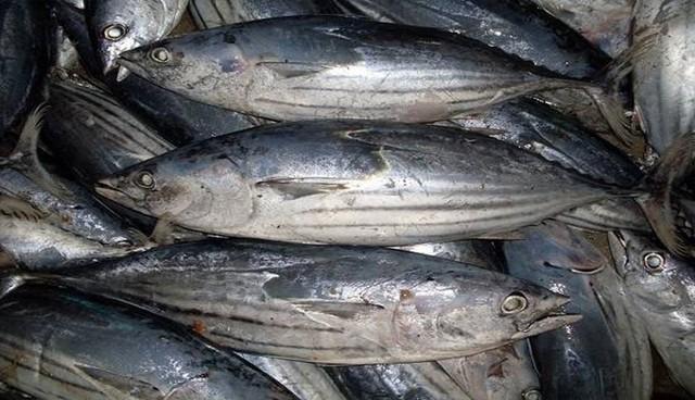 Cá ngừ với những lợi ích bất ngờ cho sức khỏe - Ảnh 4.