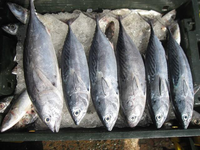 Cá ngừ với những lợi ích bất ngờ cho sức khỏe - Ảnh 5.
