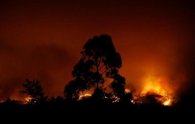 Cháy rừng ở Bồ Đào Nha: Số người thương vong đã lên tới hơn 100 - Ảnh 6.