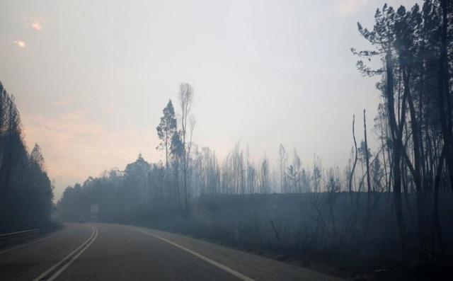 Cháy rừng ở Bồ Đào Nha: Số người thương vong đã lên tới hơn 100 - Ảnh 8.