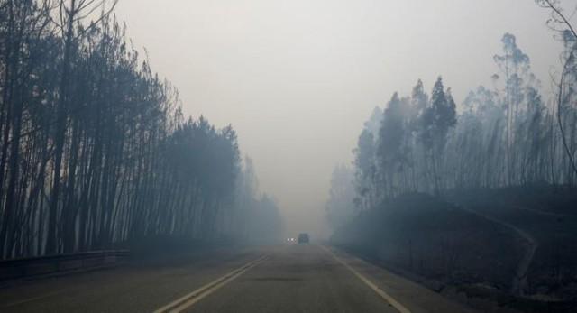 Cháy rừng ở Bồ Đào Nha: Số người thương vong đã lên tới hơn 100 - Ảnh 7.