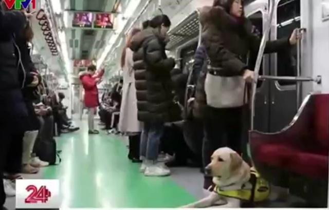 Chó dẫn đường – Bạn mới của người khiếm thị tại Hàn Quốc - Ảnh 1.