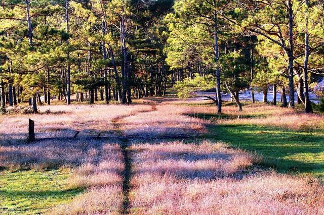 Mùa cỏ hồng đẹp như tranh ở Đà Lạt - Ảnh 5.