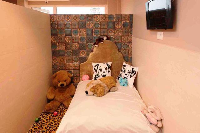 Khách sạn phong cách quý tộc dành cho cún cưng ở Ấn Độ - Ảnh 6.