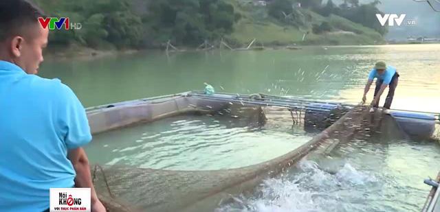 Đưa cá đặc sản miền Trung về nhân giống tại sông Đà - Ảnh 1.