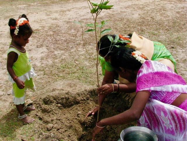 Choáng với màn trồng 66 triệu cây xanh trong nửa ngày ở Ấn Độ - Ảnh 2.