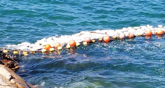 Đóng cửa 13 bãi biển ở Hong Kong (Trung Quốc) sau sự cố tràn dầu - Ảnh 5.