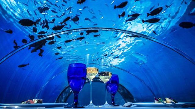 Khám phá nhà hàng dưới nước lớn nhất thế giới - Ảnh 6.