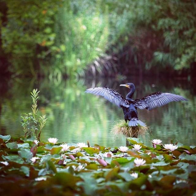 Những bức ảnh đẹp về thiên nhiên Nhật Bản - Ảnh 2.