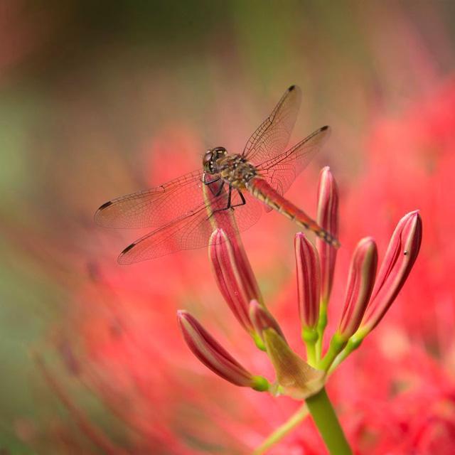 Những bức ảnh đẹp về thiên nhiên Nhật Bản - Ảnh 13.