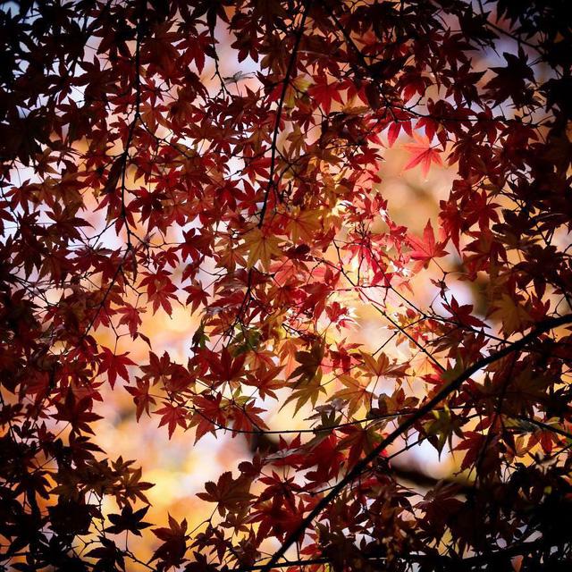 Những bức ảnh đẹp về thiên nhiên Nhật Bản - Ảnh 15.