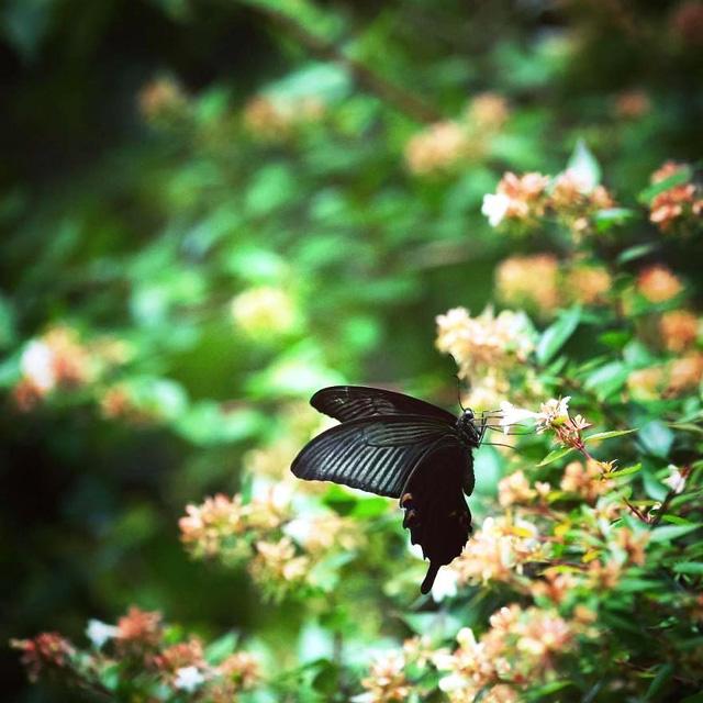Những bức ảnh đẹp về thiên nhiên Nhật Bản - Ảnh 18.