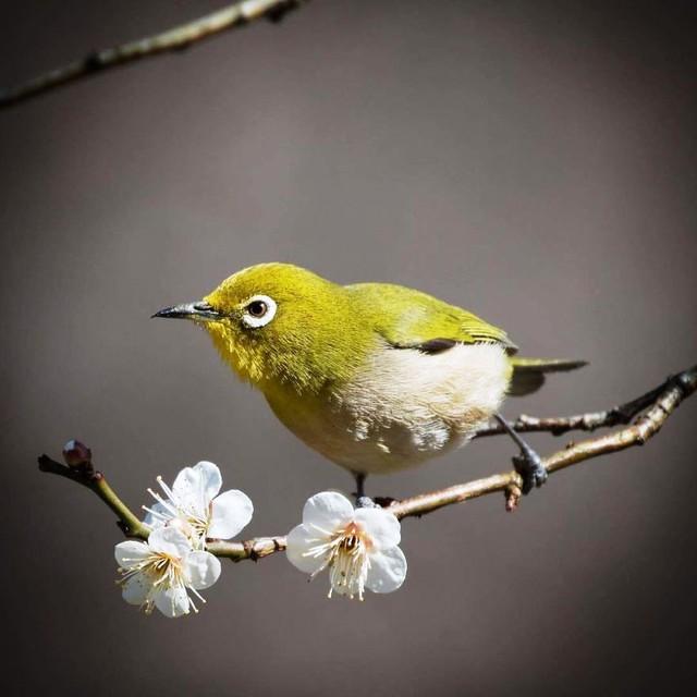 Những bức ảnh đẹp về thiên nhiên Nhật Bản - Ảnh 1.
