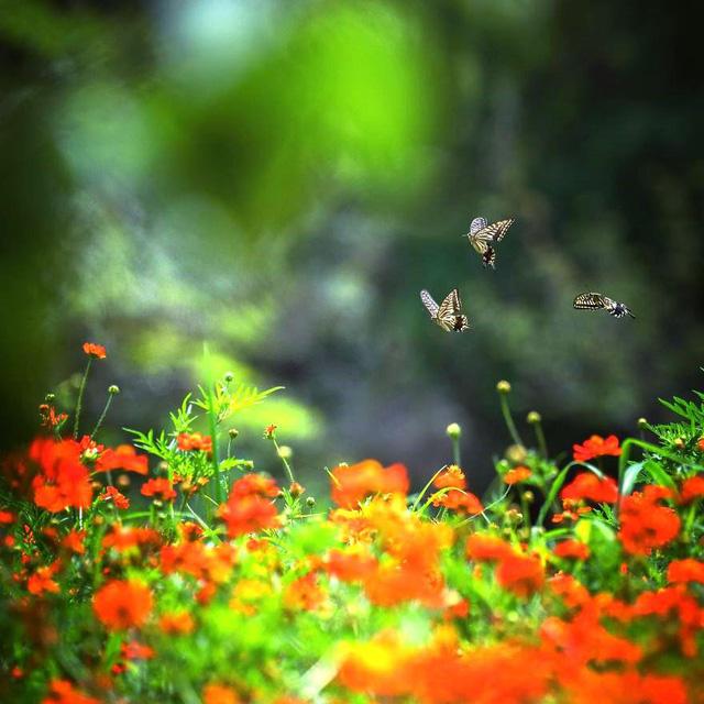 Những bức ảnh đẹp về thiên nhiên Nhật Bản - Ảnh 3.