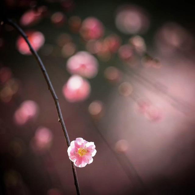 Những bức ảnh đẹp về thiên nhiên Nhật Bản - Ảnh 6.