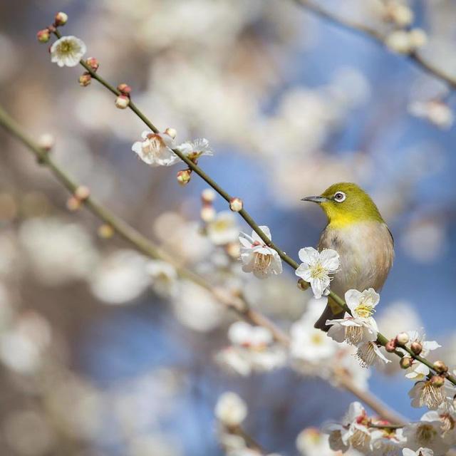 Những bức ảnh đẹp về thiên nhiên Nhật Bản - Ảnh 5.