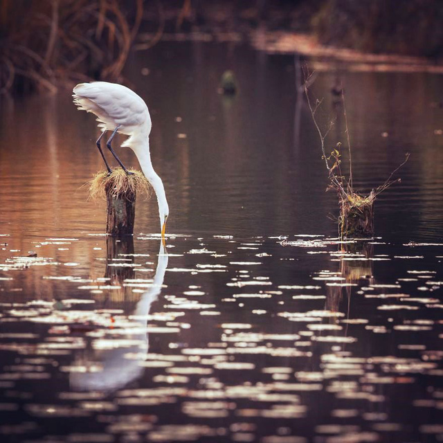 Những bức ảnh đẹp về thiên nhiên Nhật Bản - Ảnh 7.