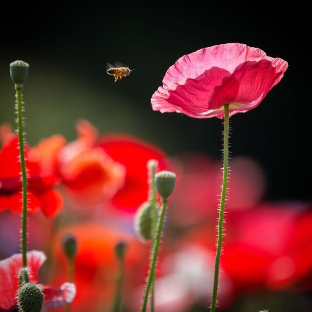 Những bức ảnh đẹp về thiên nhiên Nhật Bản - Ảnh 8.