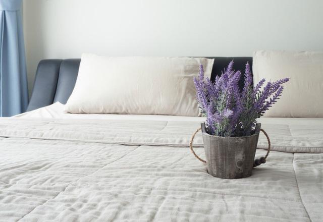Những loại cây đặt trong phòng tốt cho giấc ngủ của bạn - Ảnh 2.
