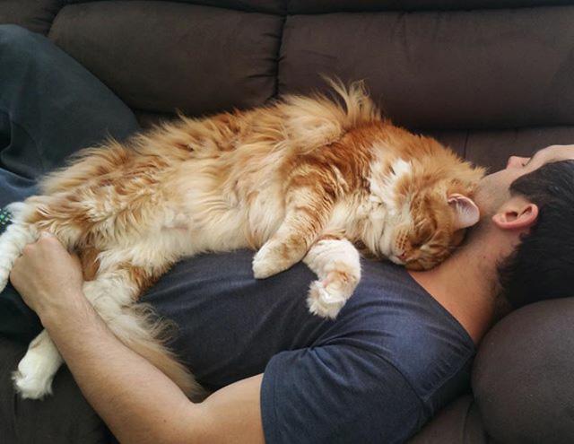 Chú mèo lập kỷ lục thế giới với chiều dài 1,2m - Ảnh 3.