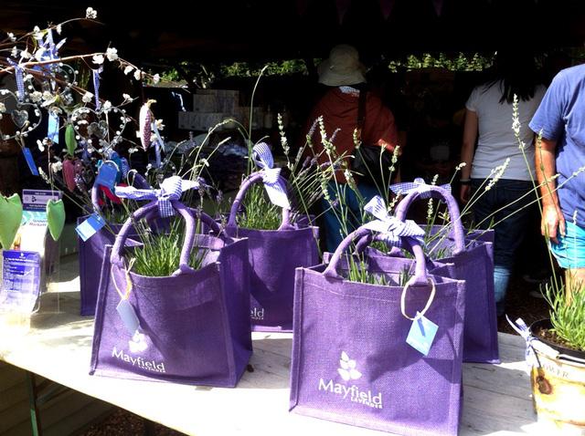 Mô hình kinh doanh vườn hoa oải hương ở Anh - Ảnh 3.