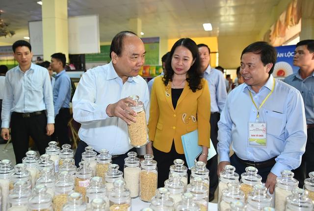 Thủ tướng: Cần một tầm nhìn mới cho hạt gạo Việt Nam - Ảnh 2.