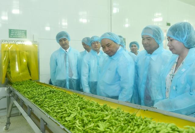 Thủ tướng: Cần một tầm nhìn mới cho hạt gạo Việt Nam - Ảnh 4.