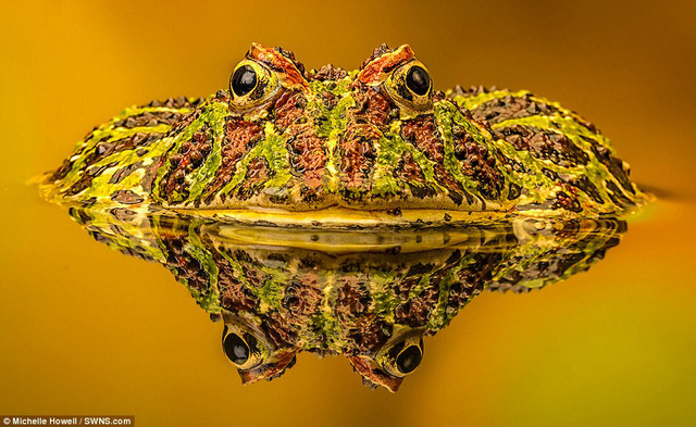 Những bức ảnh xuất sắc về động vật trong tự nhiên - Ảnh 1.