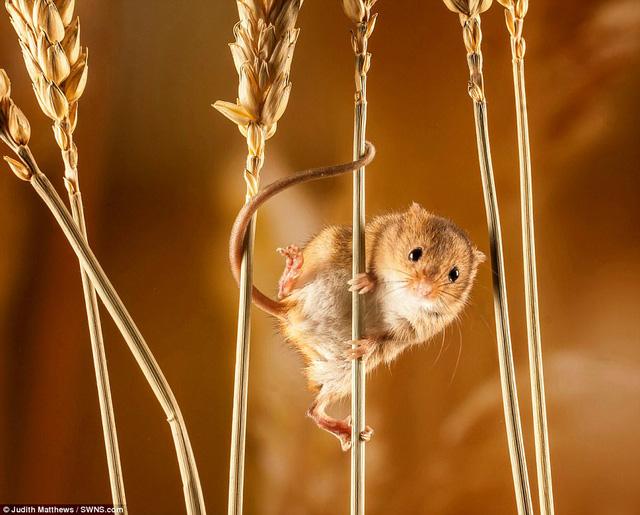 Những bức ảnh xuất sắc về động vật trong tự nhiên - Ảnh 2.