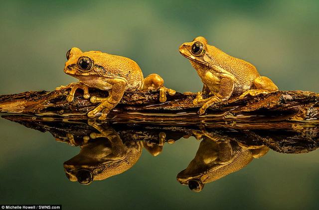 Những bức ảnh xuất sắc về động vật trong tự nhiên - Ảnh 7.