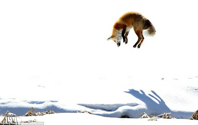 Những bức ảnh xuất sắc về động vật trong tự nhiên - Ảnh 8.