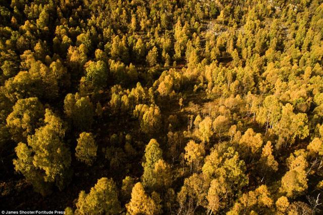 Cảnh mùa thu tuyệt đẹp ở Scotland nhìn từ trên cao - Ảnh 12.