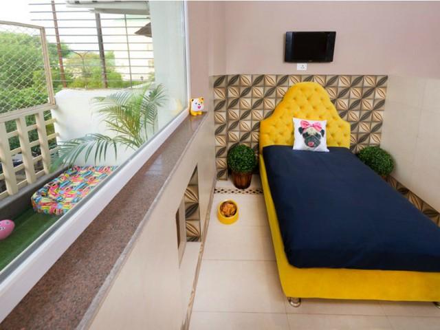 Khách sạn phong cách quý tộc dành cho cún cưng ở Ấn Độ - Ảnh 9.