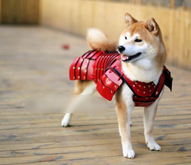 Phục vụ thú cưng - Mô hình kinh doanh mới thu nhiều lợi nhuận - Ảnh 1.