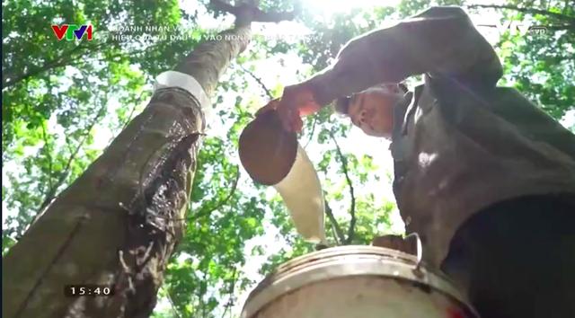 Doanh nhân và Hội nhập: Hiệu quả từ đầu tư nông nghiệp ở Lào - Ảnh 1.