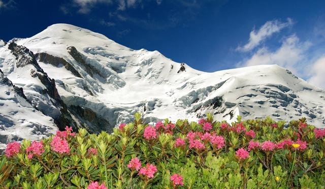 Mùa hè tuyệt đẹp trên dãy núi Alps - Ảnh 1.