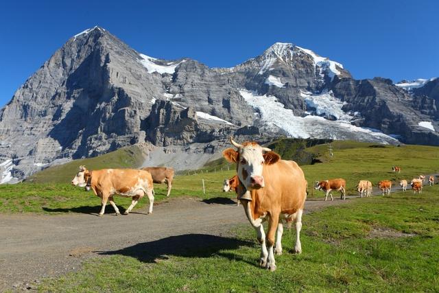 Mùa hè tuyệt đẹp trên dãy núi Alps - Ảnh 2.