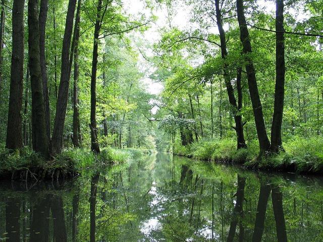 Lạc bước tới Spreewald - Venice của nước Đức - ảnh 1