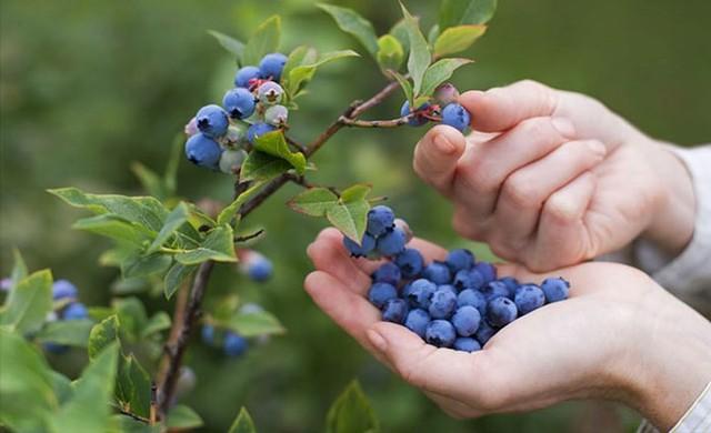 8 thực phẩm giúp tăng cường khả năng não bộ, đẩy lùi lão hóa - Ảnh 2.