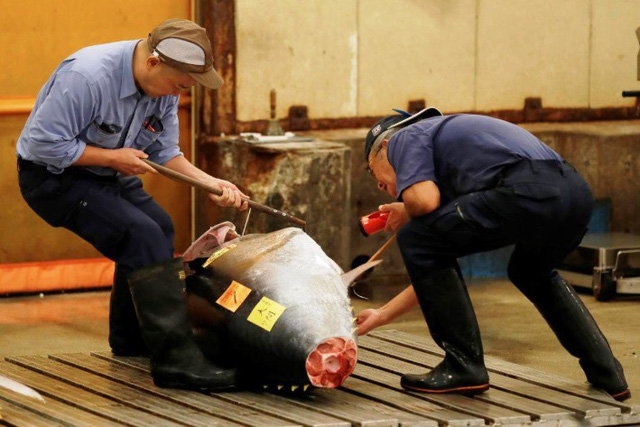 Phiên đấu giá cuối cùng năm 2018 tại chợ cá lớn nhất thế giới Tsukiji - Ảnh 3.