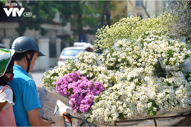 Cúc họa mi đẹp mơ màng giữa phố Hà Nội - Ảnh 6.