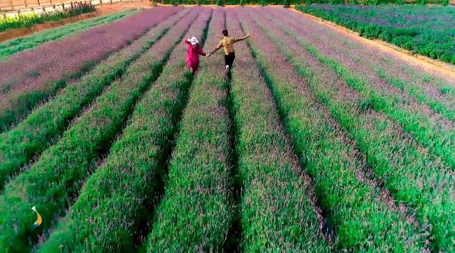 Cùng Đào của Quỳnh búp bê check in cánh đồng hoa oải hương gây sốt ở Đà Lạt - Ảnh 7.