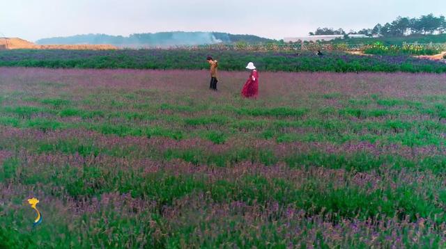 Cùng Đào của Quỳnh búp bê check in cánh đồng hoa oải hương gây sốt ở Đà Lạt - Ảnh 5.