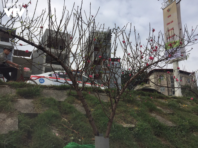 Ngỡ ngàng đào Nhật Tân nở sớm khoe sắc tại chợ hoa Quảng Bá - Ảnh 5.