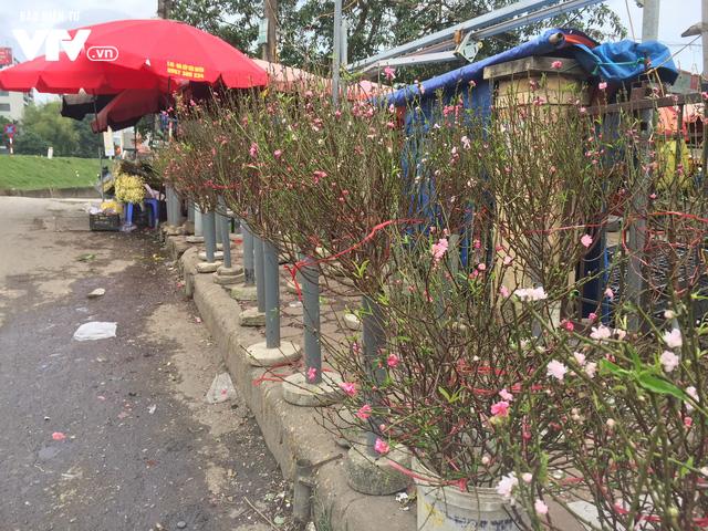 Ngỡ ngàng đào Nhật Tân nở sớm khoe sắc tại chợ hoa Quảng Bá - Ảnh 4.